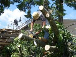 Springfield tree care