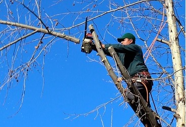 best tree service available in Springfield, MA
