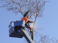 branch cutting and clearing