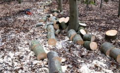 expert tree removal company