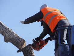 fully insured professionals trimming trees