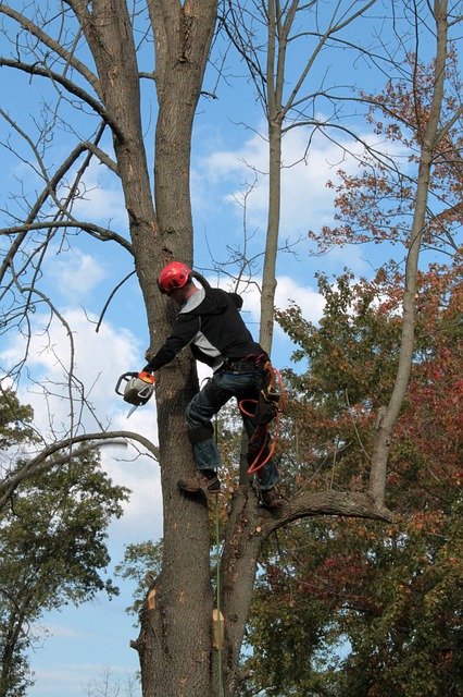 removing dead branches from a tree
