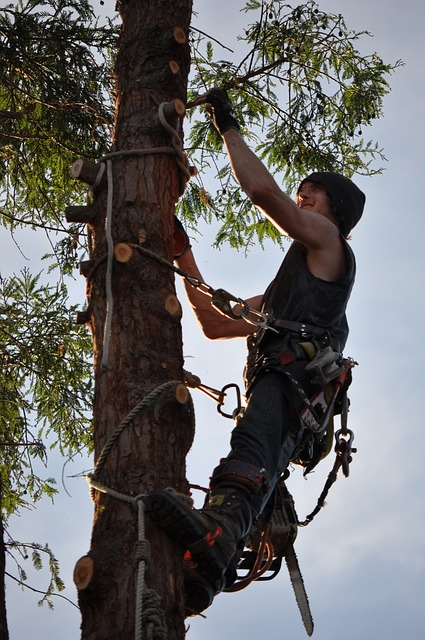 tree climbing and pruning