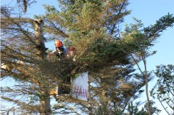 top rated tree removal business in Springfield Massachusetts